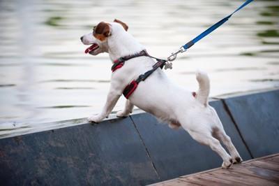 身を乗り出す犬