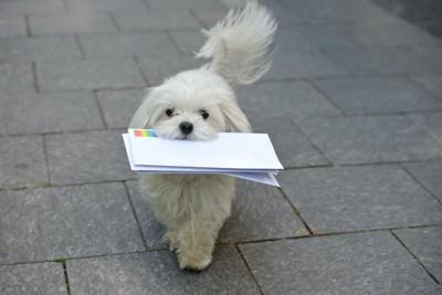 手紙を咥えながら歩く犬