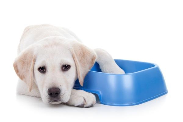 青い器に足を入れる犬