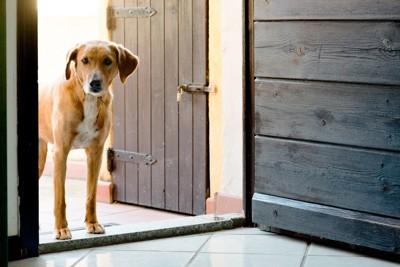 ドアのそばに立つ犬