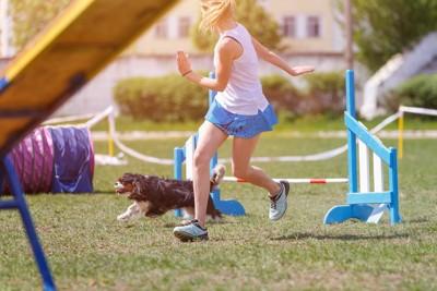 アジリティをしている犬と女性