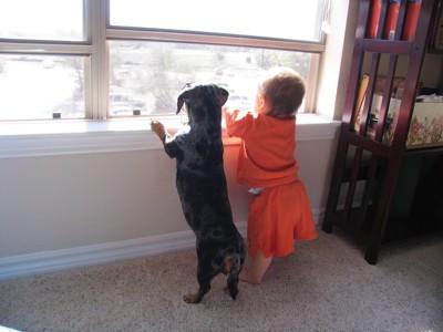 立って窓の外を眺める犬と赤ちゃん