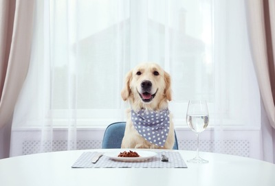 水玉のバンダナをした犬
