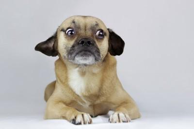 恐怖を感じている犬