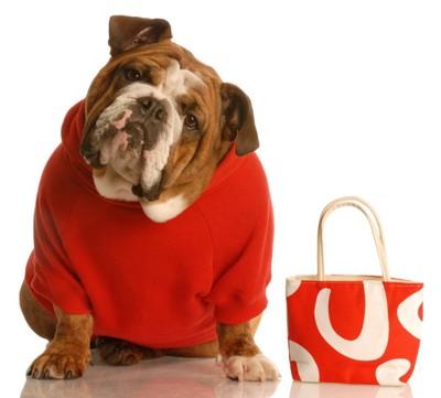 赤い服を着たブルドッグ