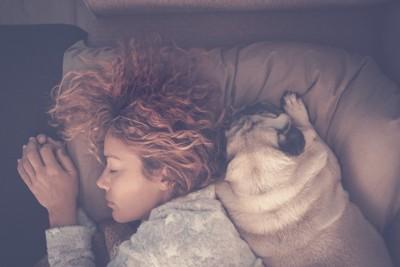 飼い主の隣で一緒に眠る犬