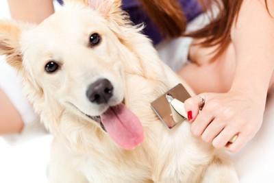 飼い主にブラッシングされている犬