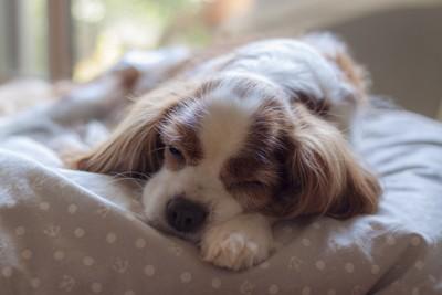 昼寝をする犬