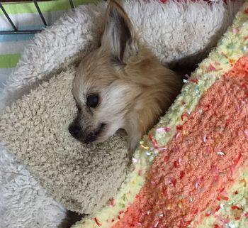 目を開けて横になっている犬