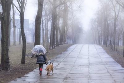 雨の中歩く人と犬