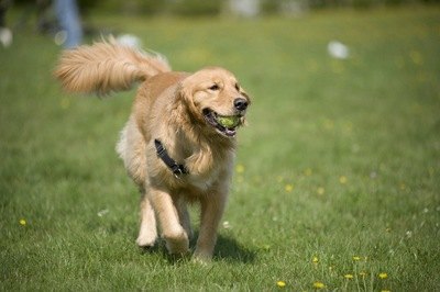 嬉しそうに尻尾をふる犬