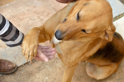 人の手に前足をかける犬