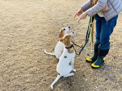 飼い主を見つめる2匹の犬