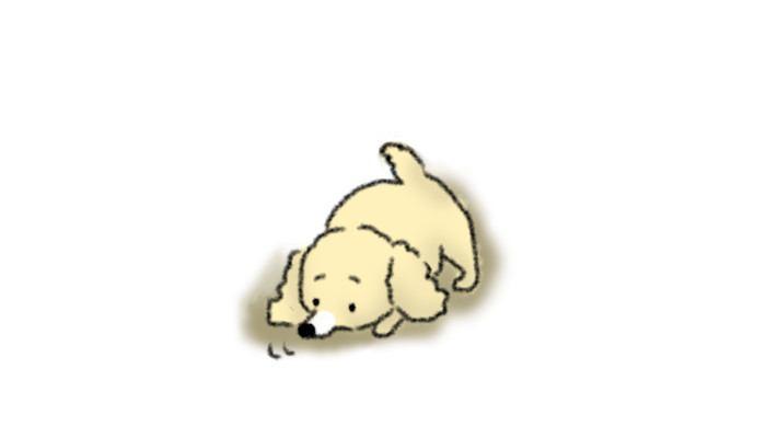 床、地面のニオイを嗅ぐカーミングシグナル