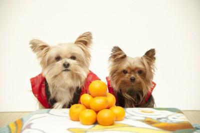 みかんの山と2頭の犬