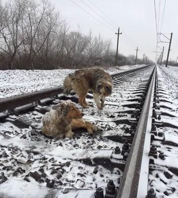線路上に2頭の犬