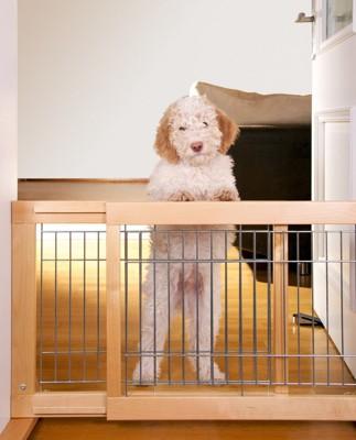 ゲートに手をかけている犬