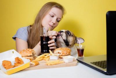 ハンバーガーを食べる犬