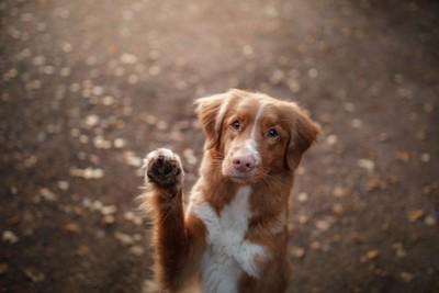 前足を上げる犬