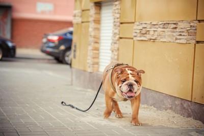 リードがつながったまま逃げる犬