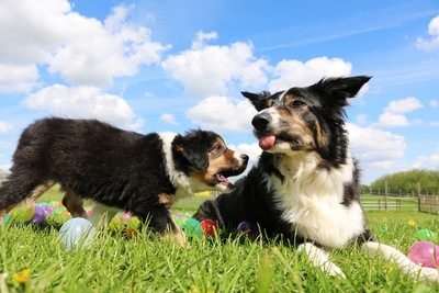 芝生にいる2匹の犬