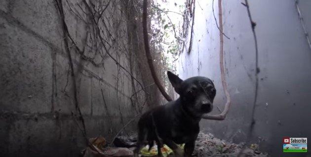 側溝の中に立つ犬