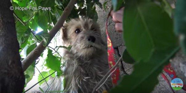 茂みに隠れた犬