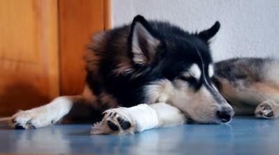 脚を噛んでる犬