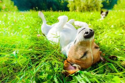 草原に寝転んでくつろぐ犬