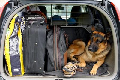 車の中の犬と荷物