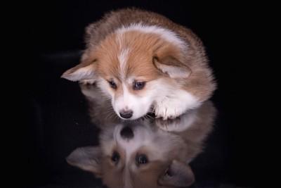 暗闇の中で伏せ目がちな犬