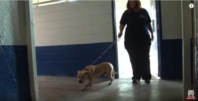 保護され施設にやってきた犬