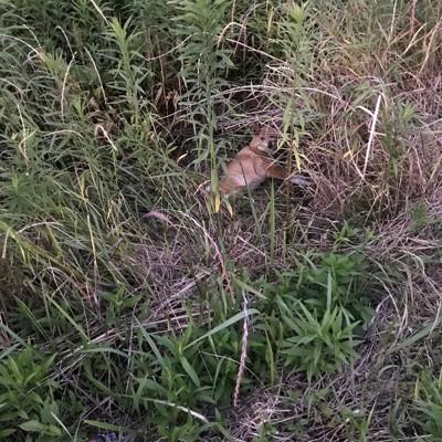 茂みの中の犬
