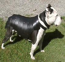 軍用犬イメージ