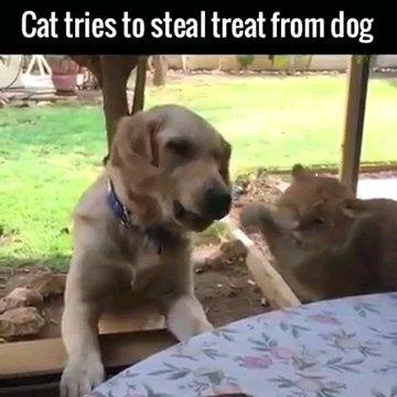 手を引っ込める猫