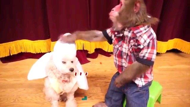 犬の頭に猿の手