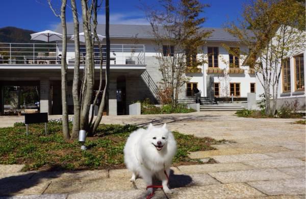 白い建物をバックに犬