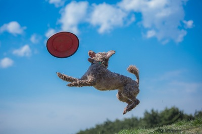 ディスクに飛び付く犬