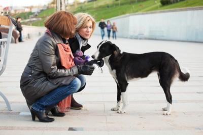 2人の女性と犬