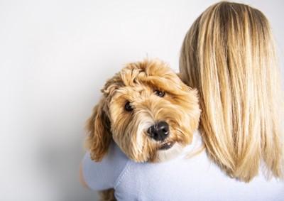 抱っこされている犬