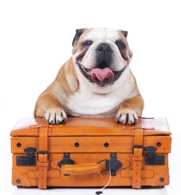 旅行鞄とブルドッグ