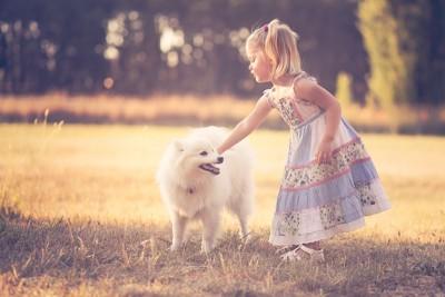 女の子と屋外で遊ぶ白い犬