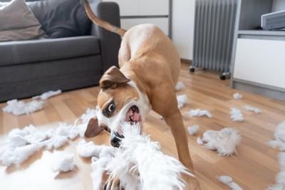 枕に噛み付いて部屋中を散らかしている犬