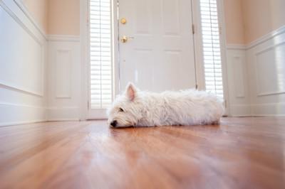ドアの前で寝むる犬