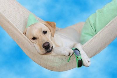 ハンモックに乗って怠そうな犬