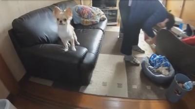 犬がソファの上に乗っている