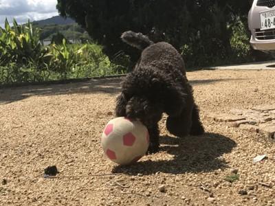 オカマ犬つばきの投稿画像