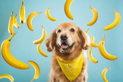 犬とたくさんのバナナ