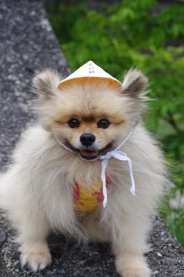 外で帽子をかぶるサブレ