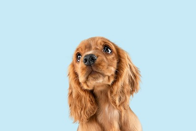 まん丸な目で上を見つめる子犬